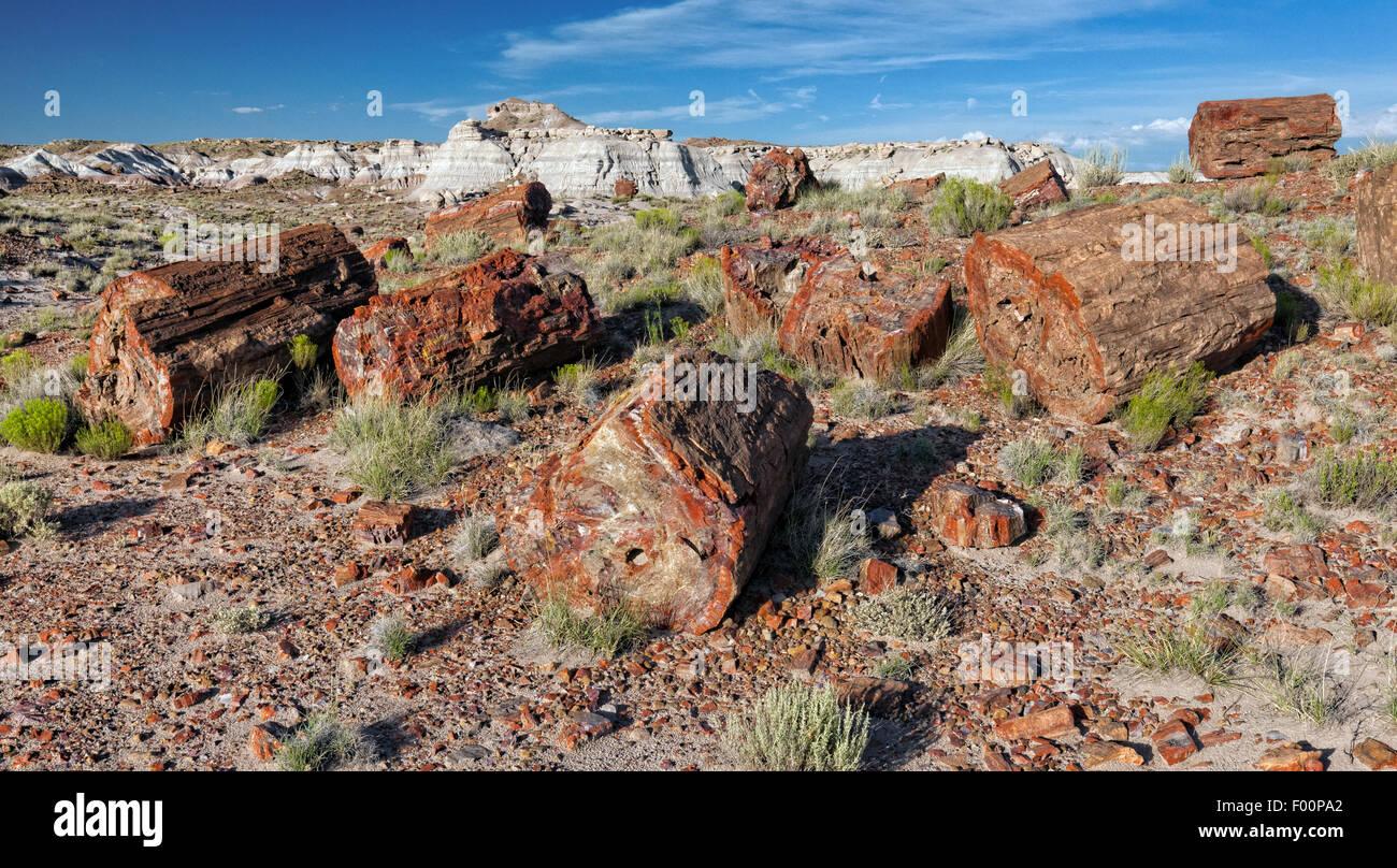 Petrified Forest National Park, AZ - Stock Image