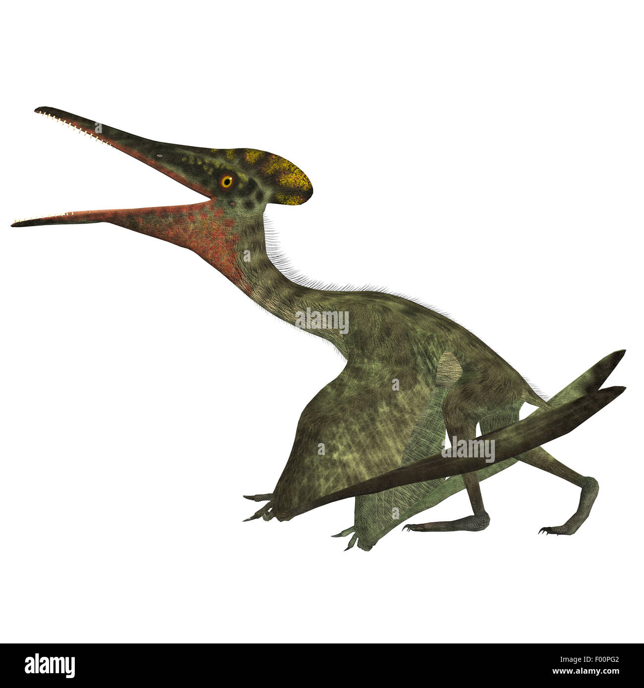 Pterodactylus was a flying carnivorous reptile that lived in the Jurassic Period of Bavaria, Germany. - Stock Image