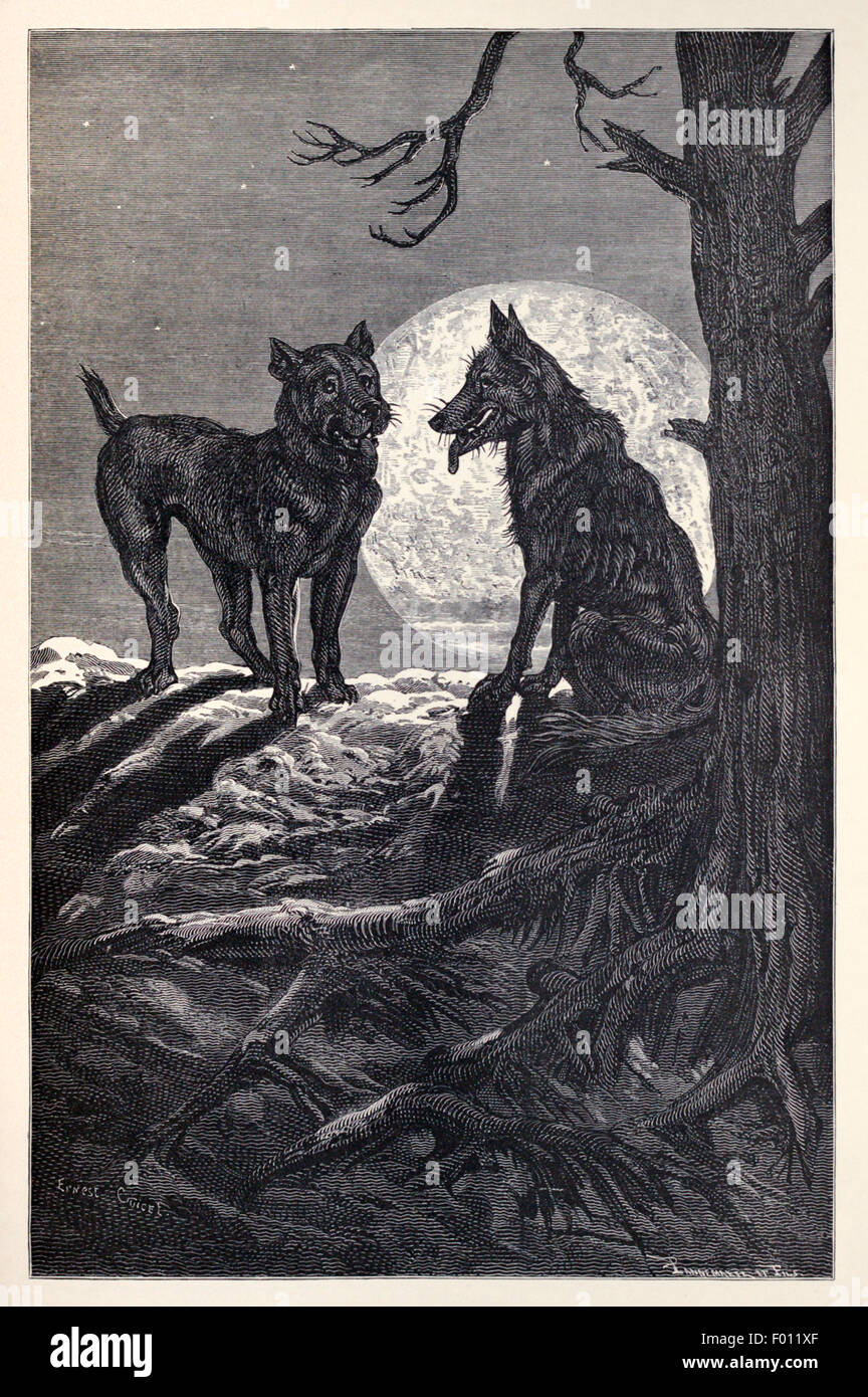 the dog and the wolf