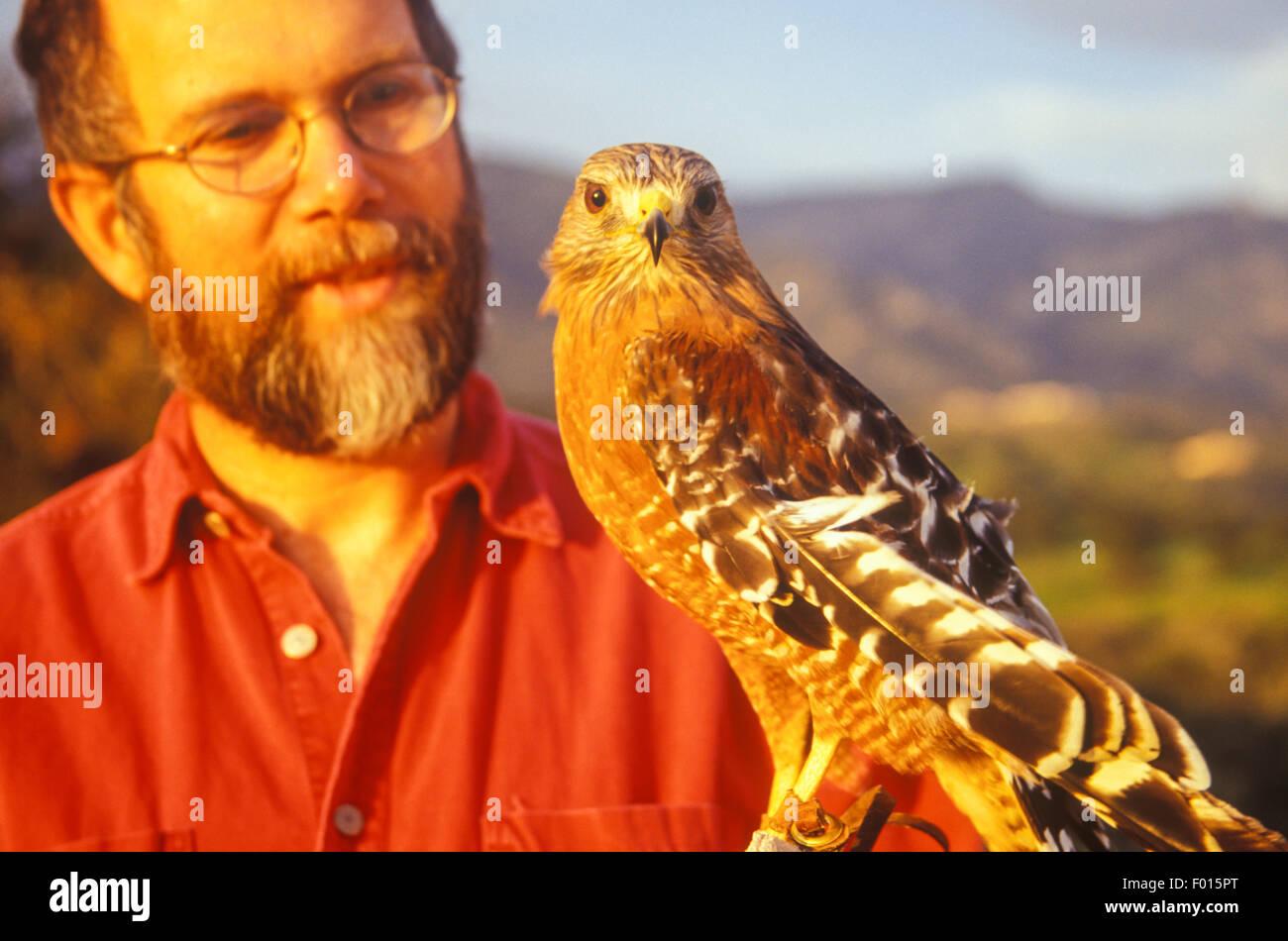 crippled red-shouldered hawk, Buteo lineatus, Santa Barbara Wildlife Care Network, Santa Barbara, California - Stock Image