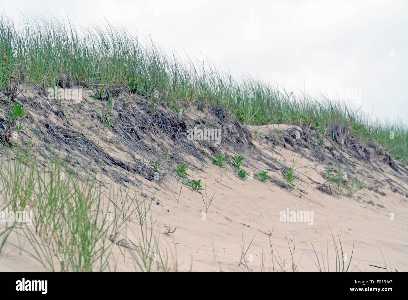 Sand Dune with Beach Grass Montauk Long Island New York - Stock Image