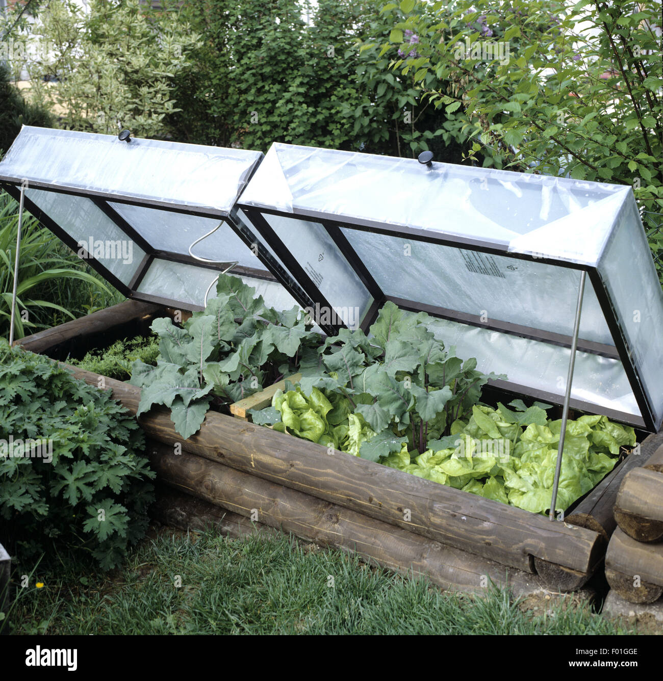 Fruehbeet, Garten, Salat, Kohlrabi, Folie, Stock Photo