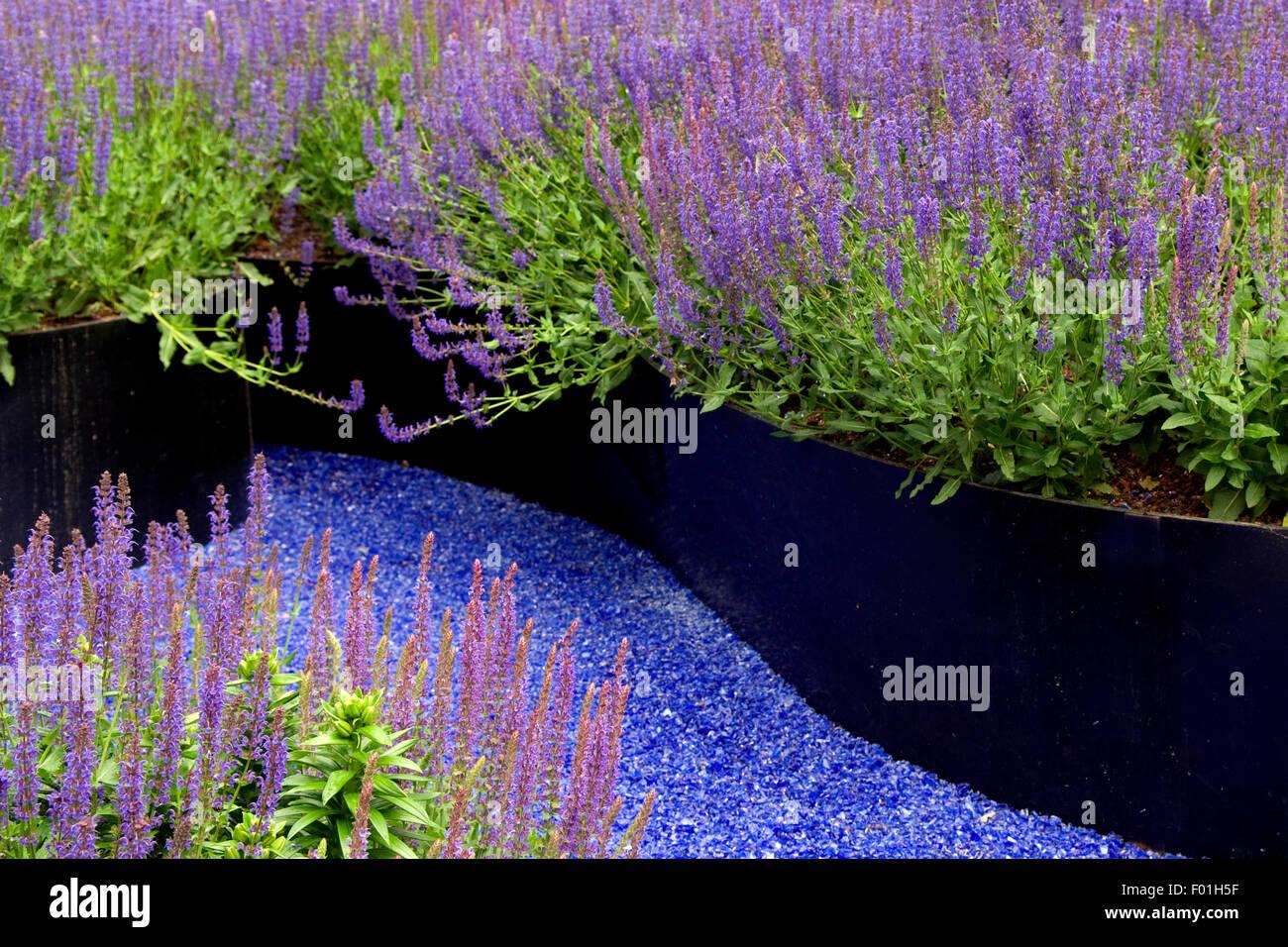 Blauer Garten; Sitzplatz, Salbei, Salvie, - Stock Image