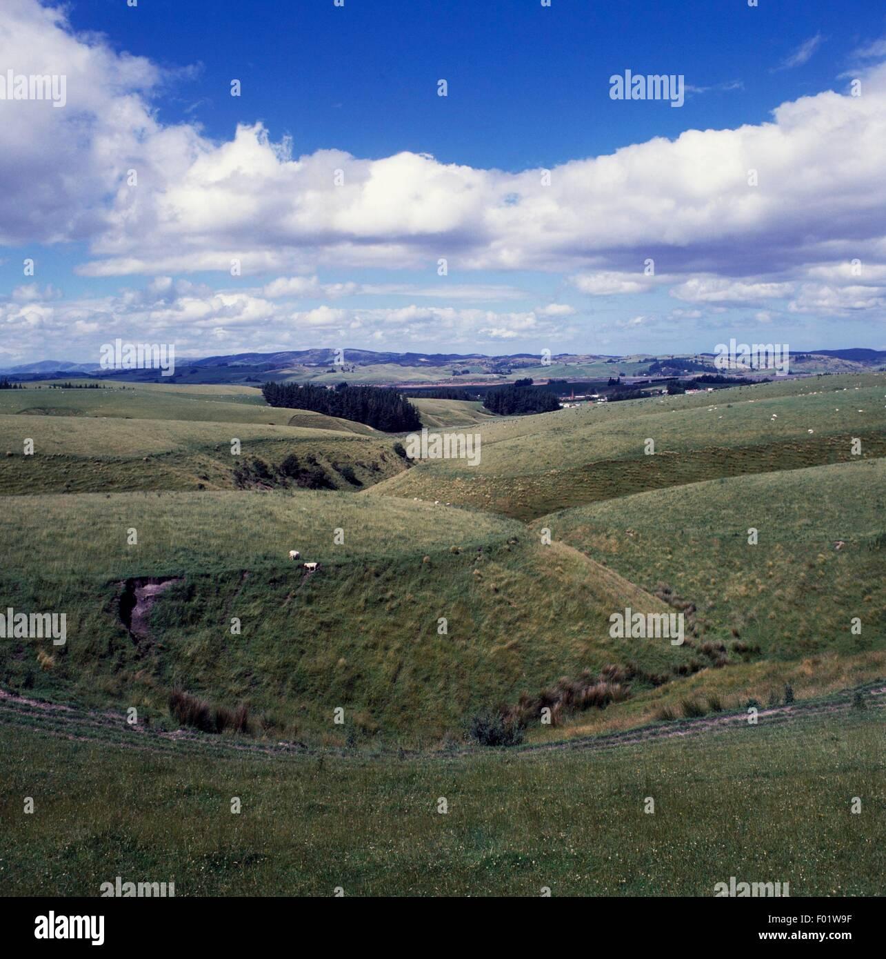 Pasture land near Milton, South Island, New Zealand. - Stock Image