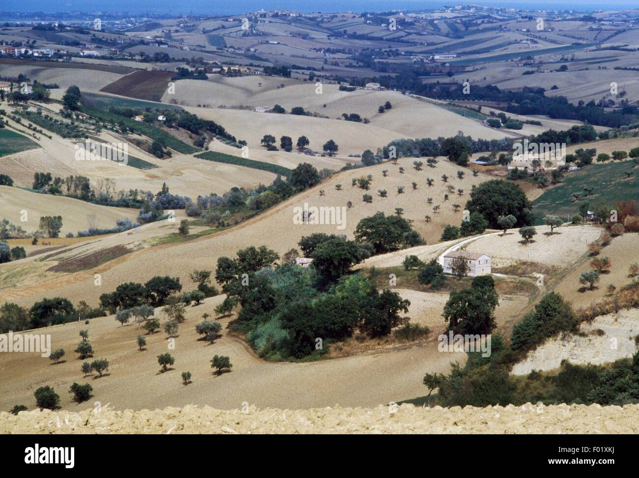 Cultivated land in the Jesi area, Marche, Italy. - Stock Image