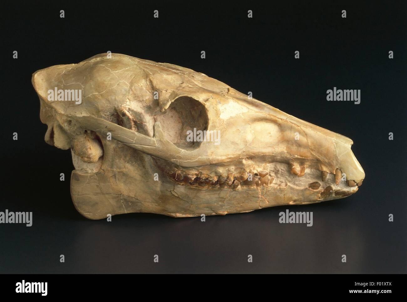 Oligocene Stock Photos & Oligocene Stock Images - Alamy