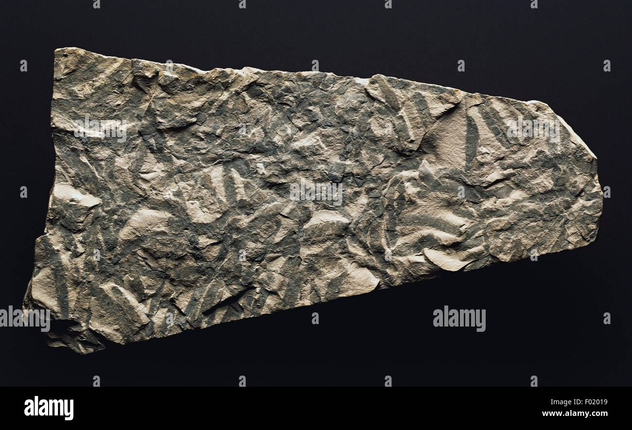 Condrites inchite from Early Triassic. - Stock Image
