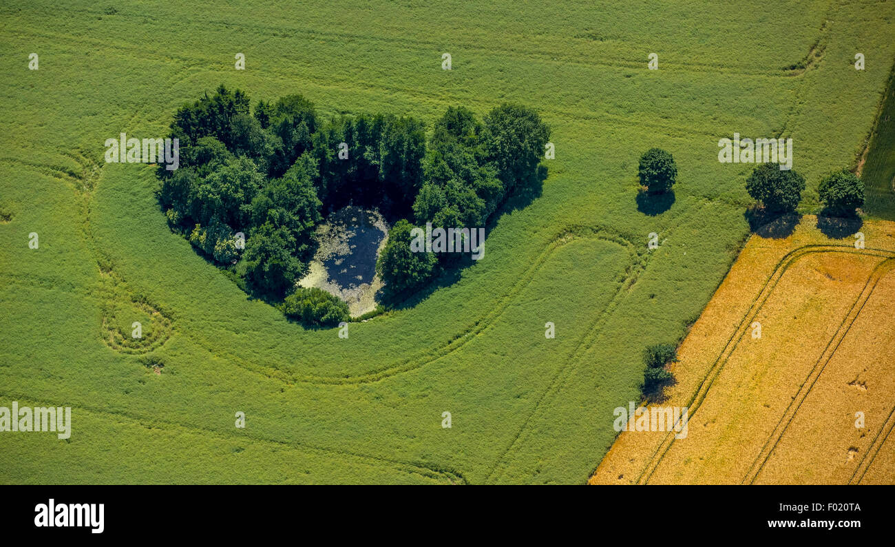 Group of trees, fields, Geesthacht, Schleswig-Holstein, Germany - Stock Image
