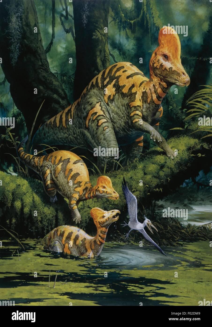 PAlaeozoology - Cretaceous period - Dinosaurs - Corythosaurus - Art work - Stock Image