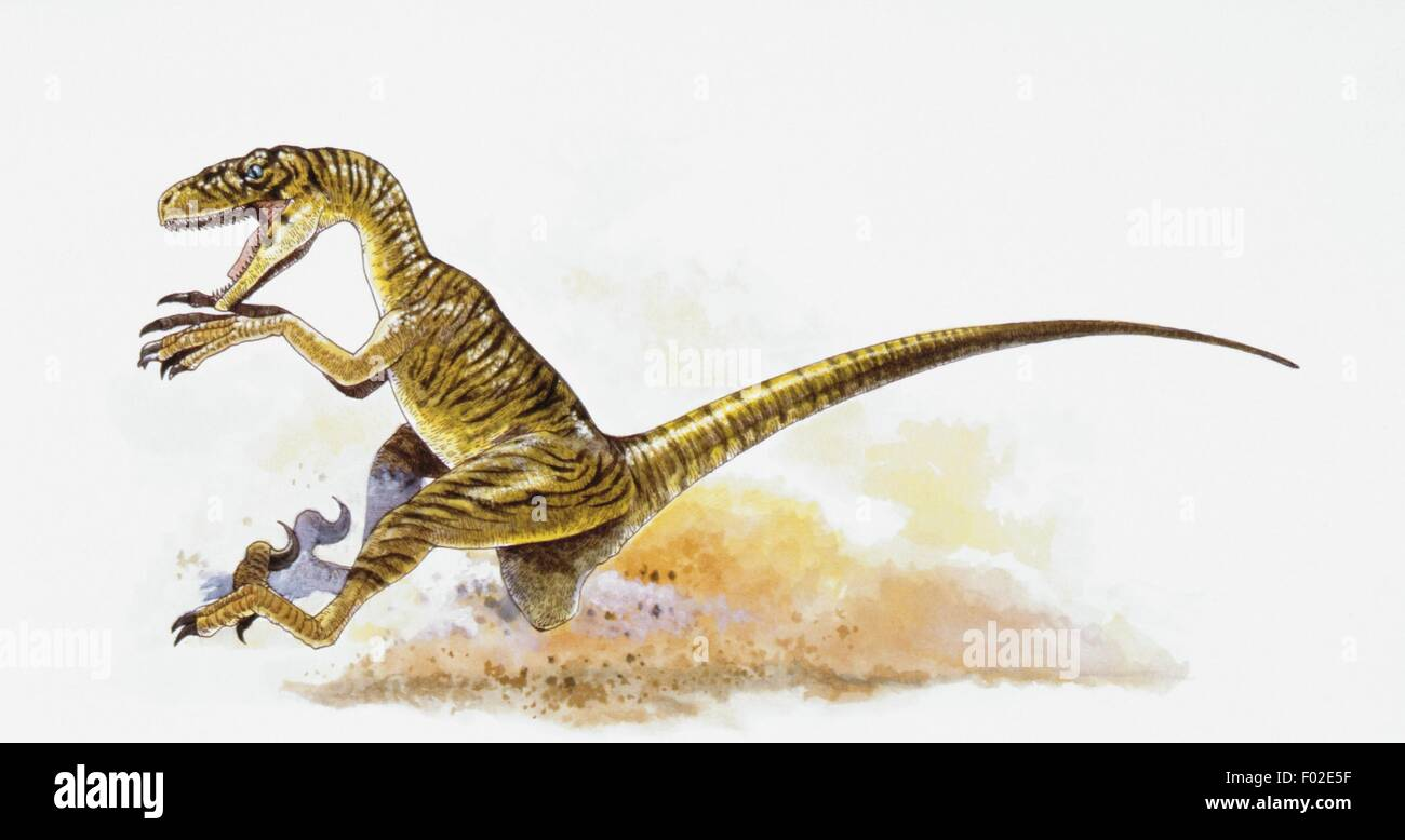 Palaeozoology - Cretaceous period - Dinosaurs - Deinonychus - Art work - Stock Image