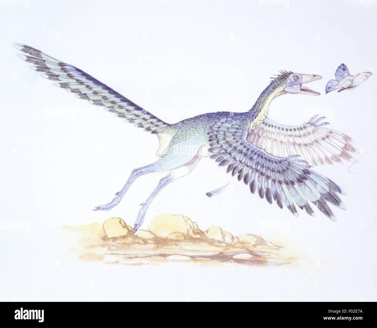 Palaeozoology - Mesozoic period - Fossil birds - Archaeopteryx - Art work - Stock Image