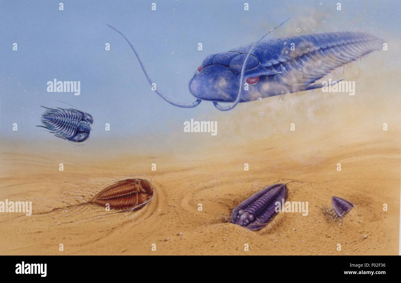 Palaeozoology - Paleozoic period - Trilobites (extinct marine arthropods) - Art work by Brin Edwards - Stock Image