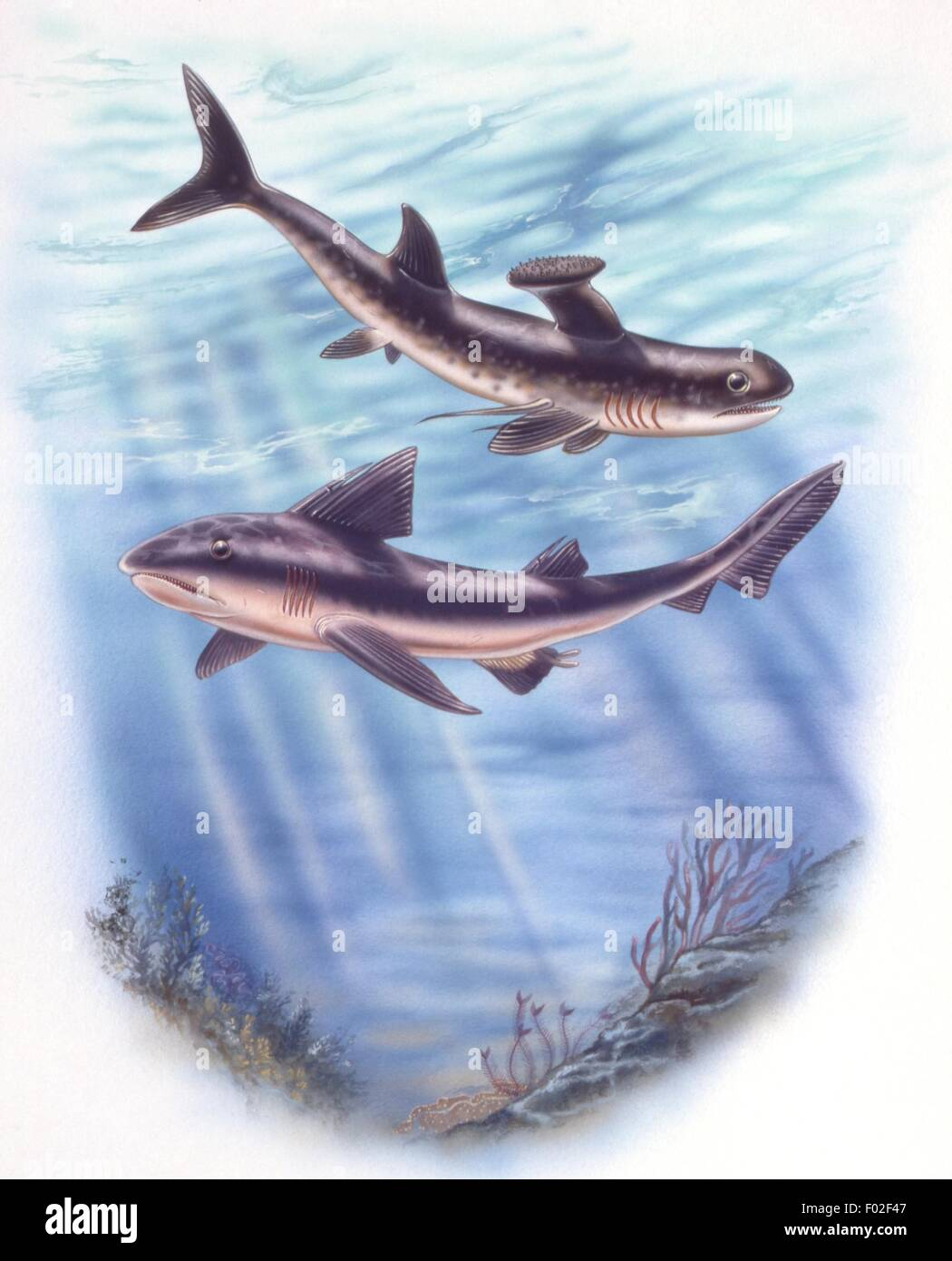 Palaeozoology - Devoniana/Carboniferous period - Fossil fishes - Stethacanthus and Hyobus - Art work by Robin Carter Stock Photo