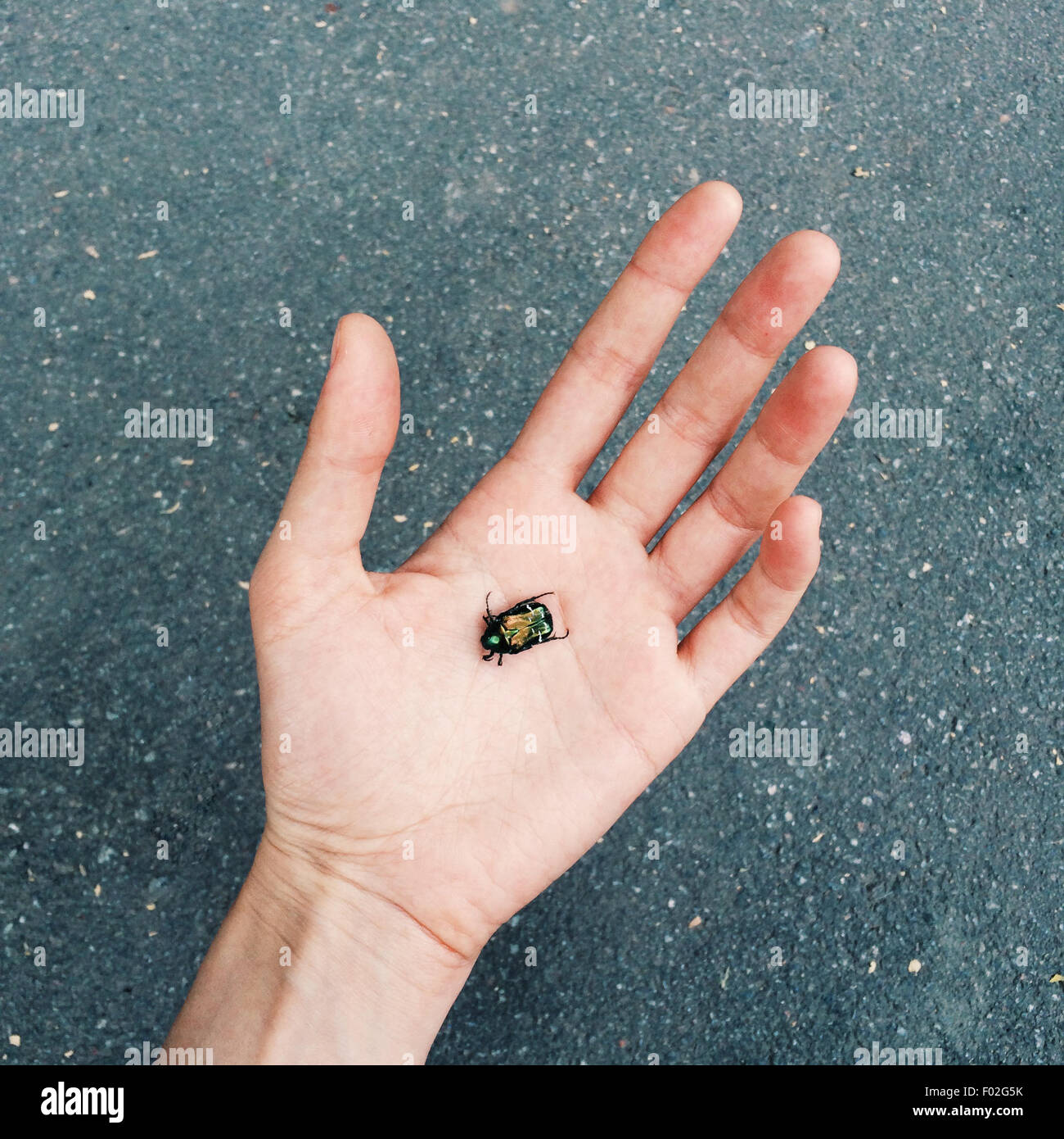 Bug in the palm of a hand - Stock Image