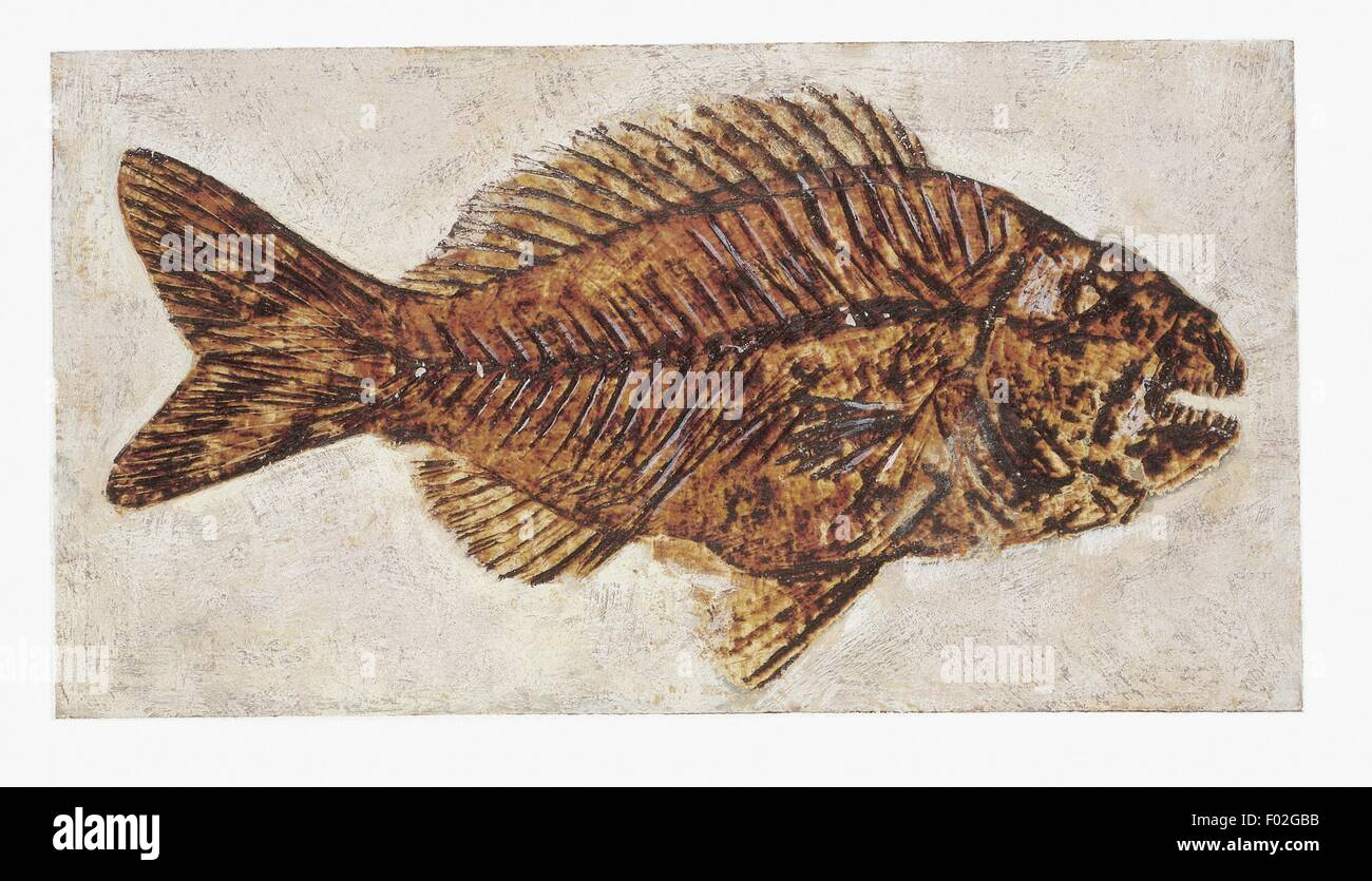 Zoology: Fossils - Fish. Art work - Stock Image