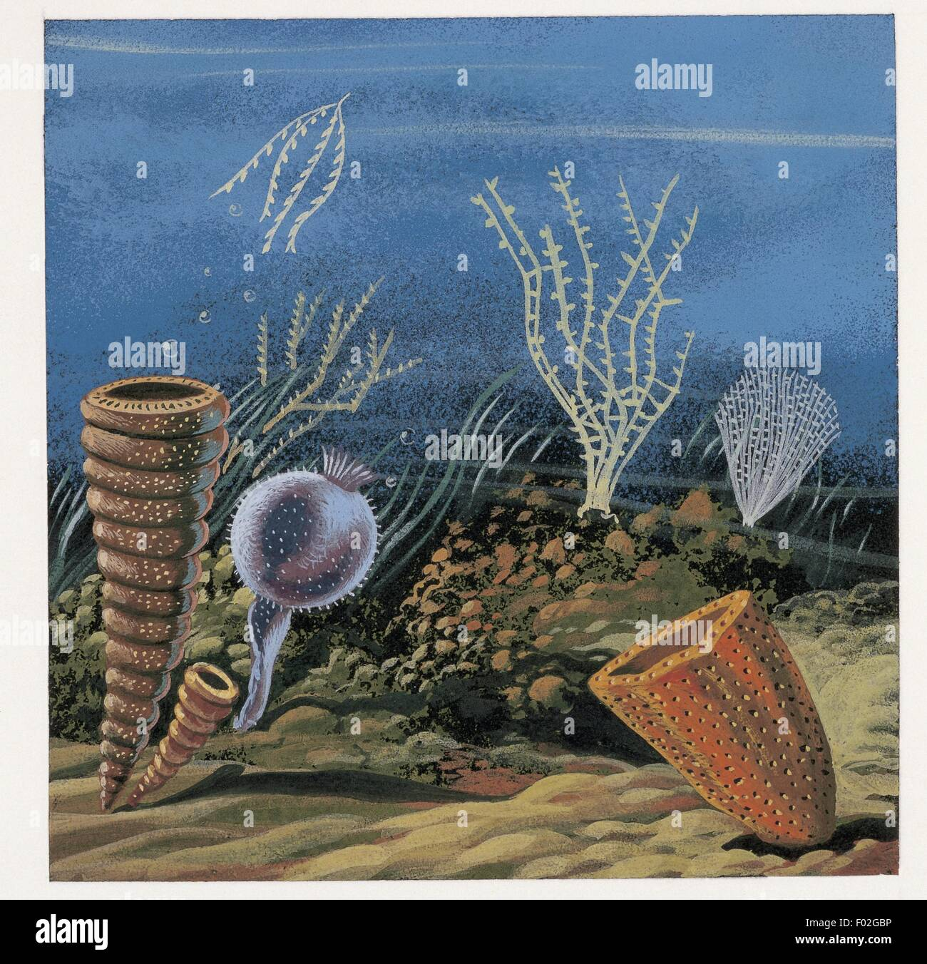 Zoology: Fossils - Graptolites and Cambrian sponges. Art work - Stock Image