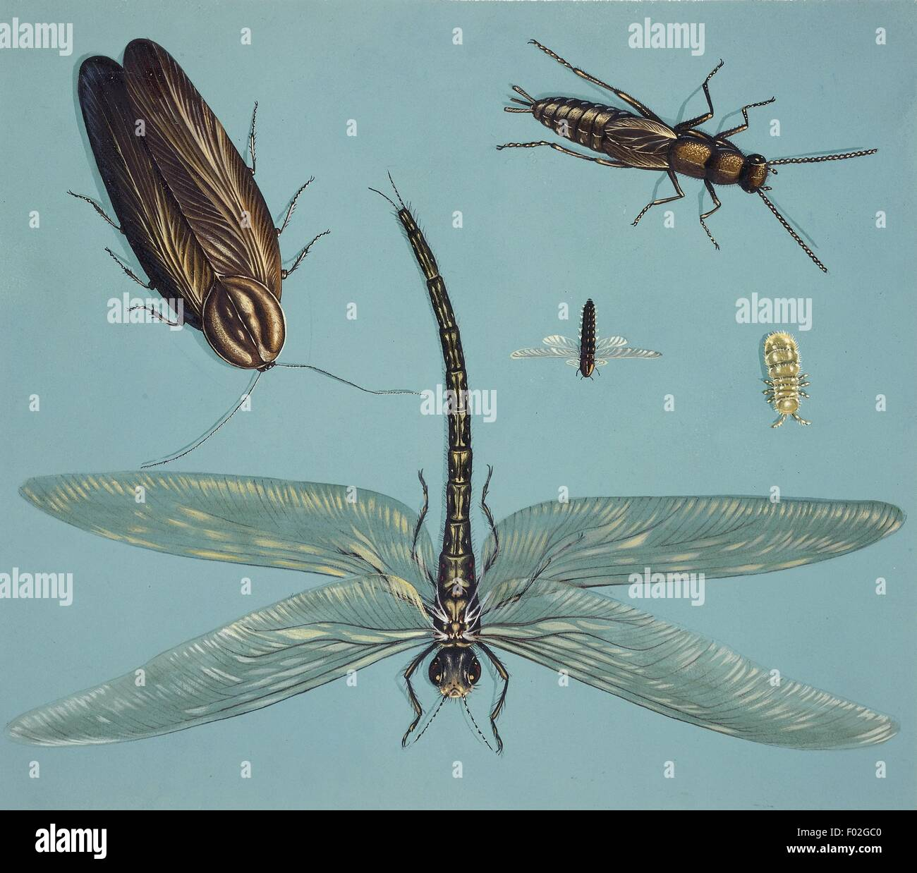 Prehistoric insects, illustration - Stock Image