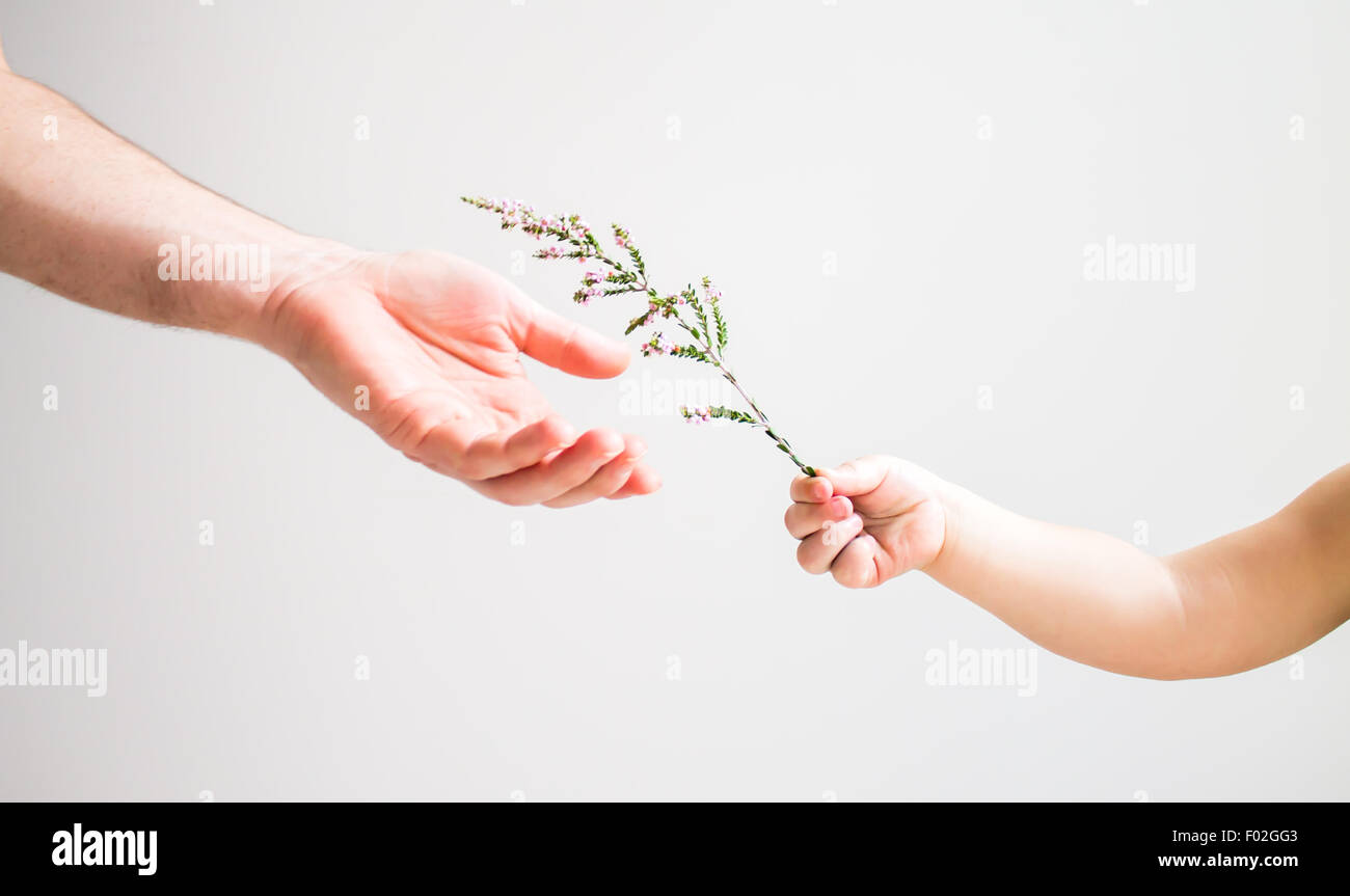 Child handing flower to an adult - Stock Image