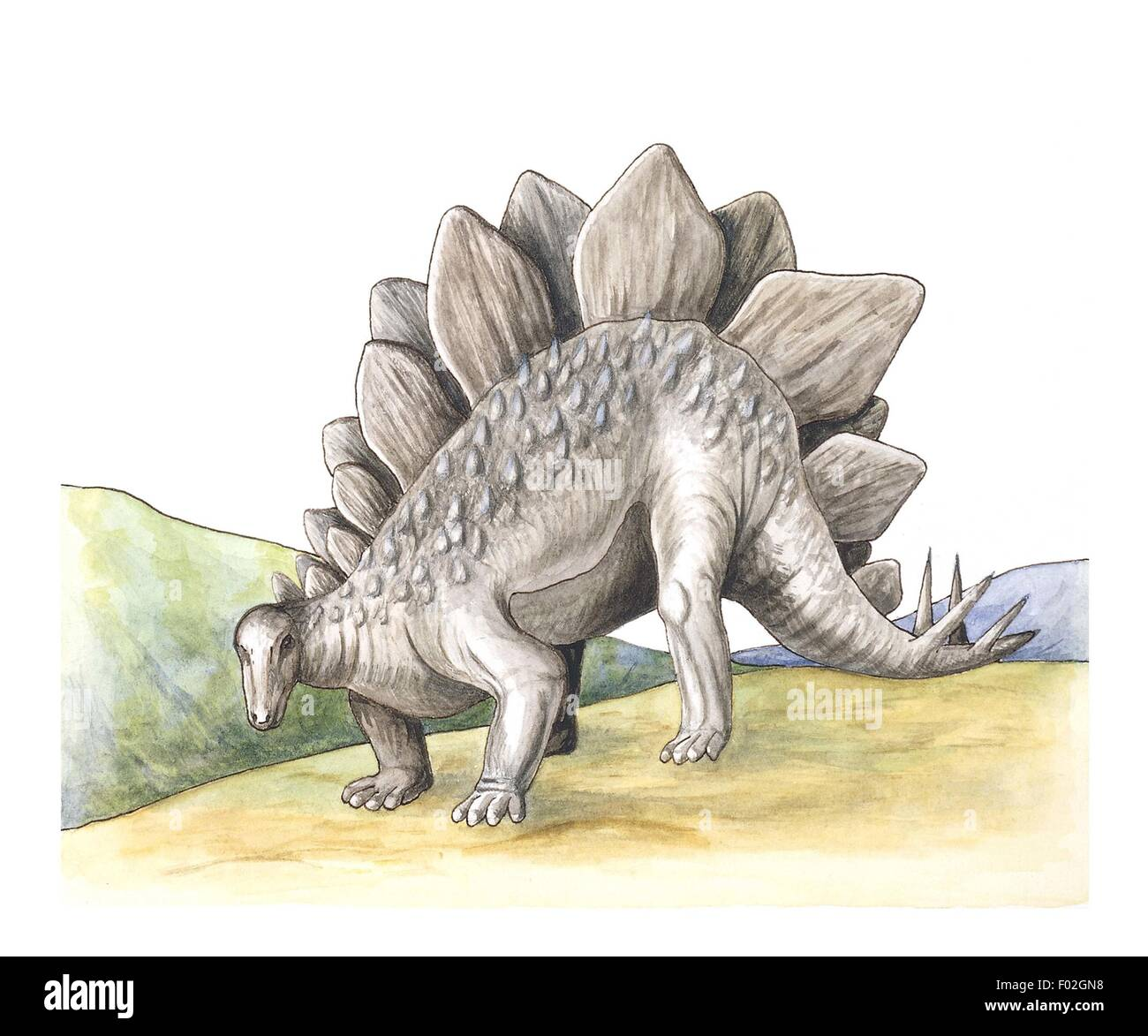 Stegosaurus, illustration - Stock Image