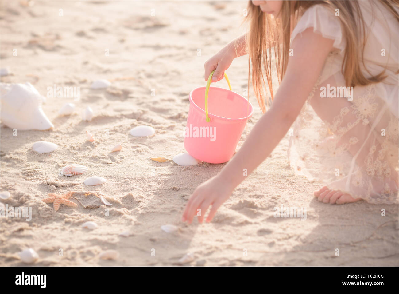 Girl collecting seashells in a bucket - Stock Image