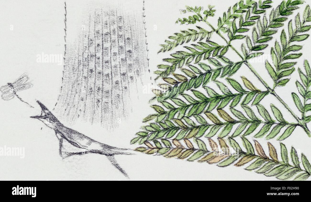 Reconstruction of a scene of the past with a fern and an ancient lizard hunting a dragonfly. Drawing. - Stock Image
