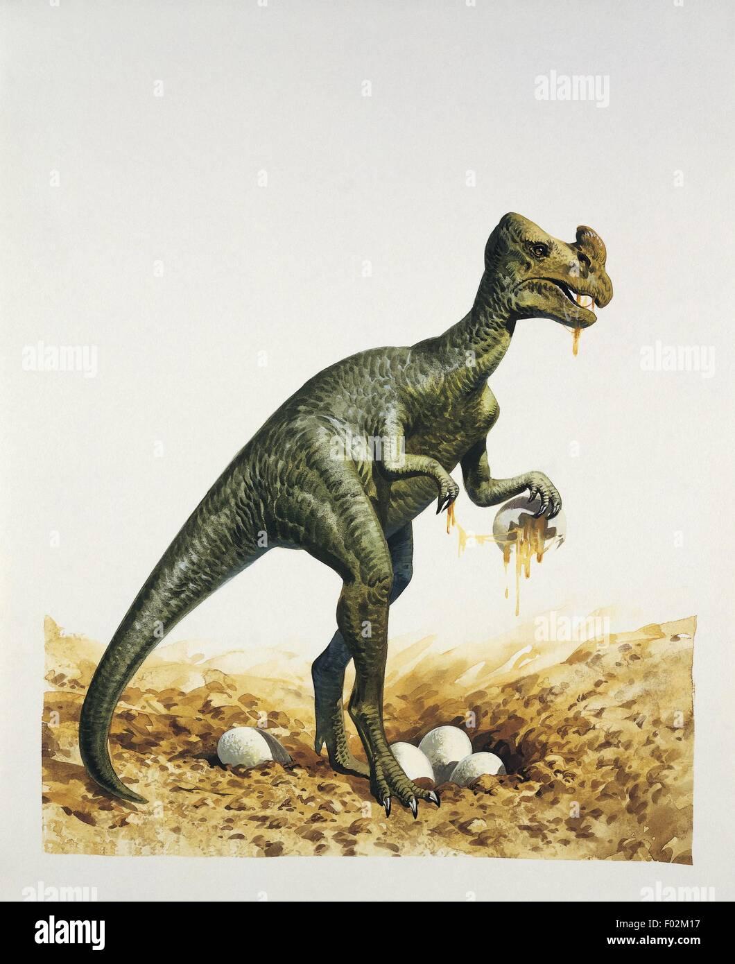 Palaeozoology - Upper Cretaceous - Dinosaur - Oviraptor (illustration by  John Francis) - Stock Image