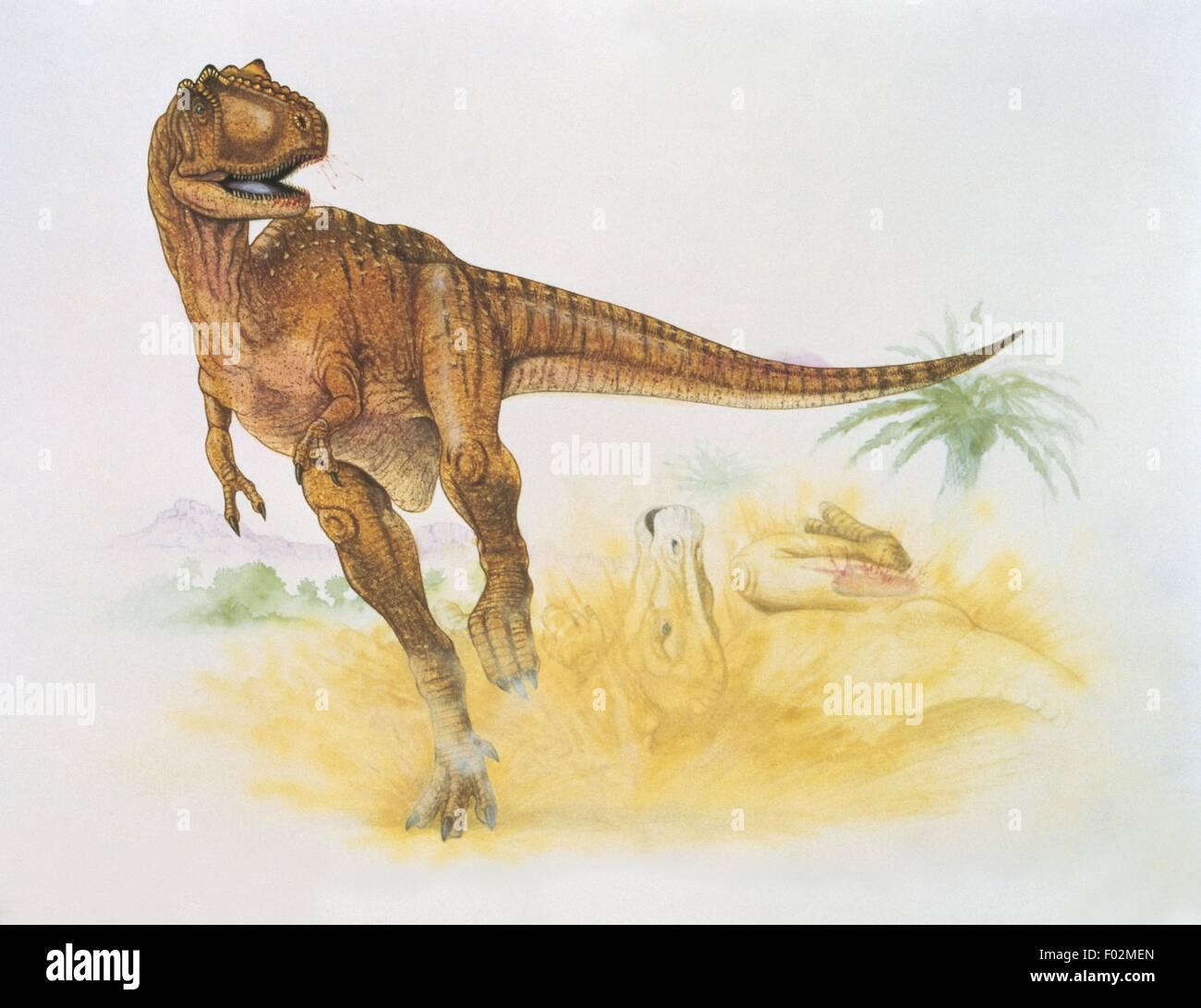 Palaeozoology - Cretaceous Period - Dinosaurs - Albertosaurus (art work by Graham Rosewarne) Stock Photo