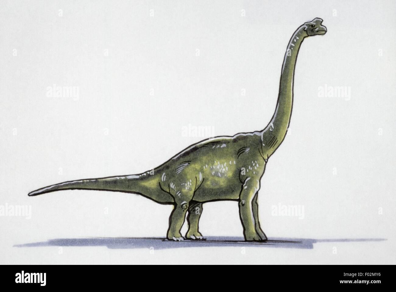 Palaeozoology - Jurassic period - inosaurs - Damalasaurus - Drawing - Stock Image