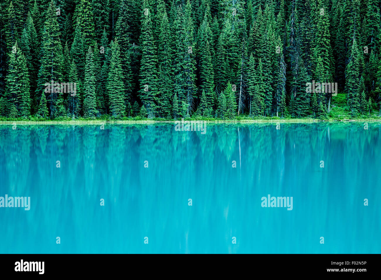 Evergreen Trees reflecting in Emerald Lake, Yoho National Park, British Columbia, Canada - Stock Image