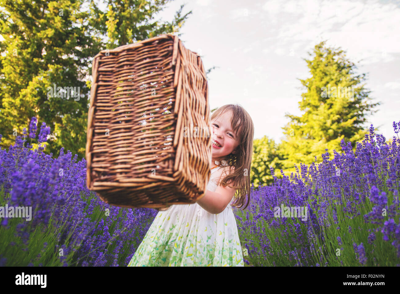 Girl waving a basket in a lavender field - Stock Image
