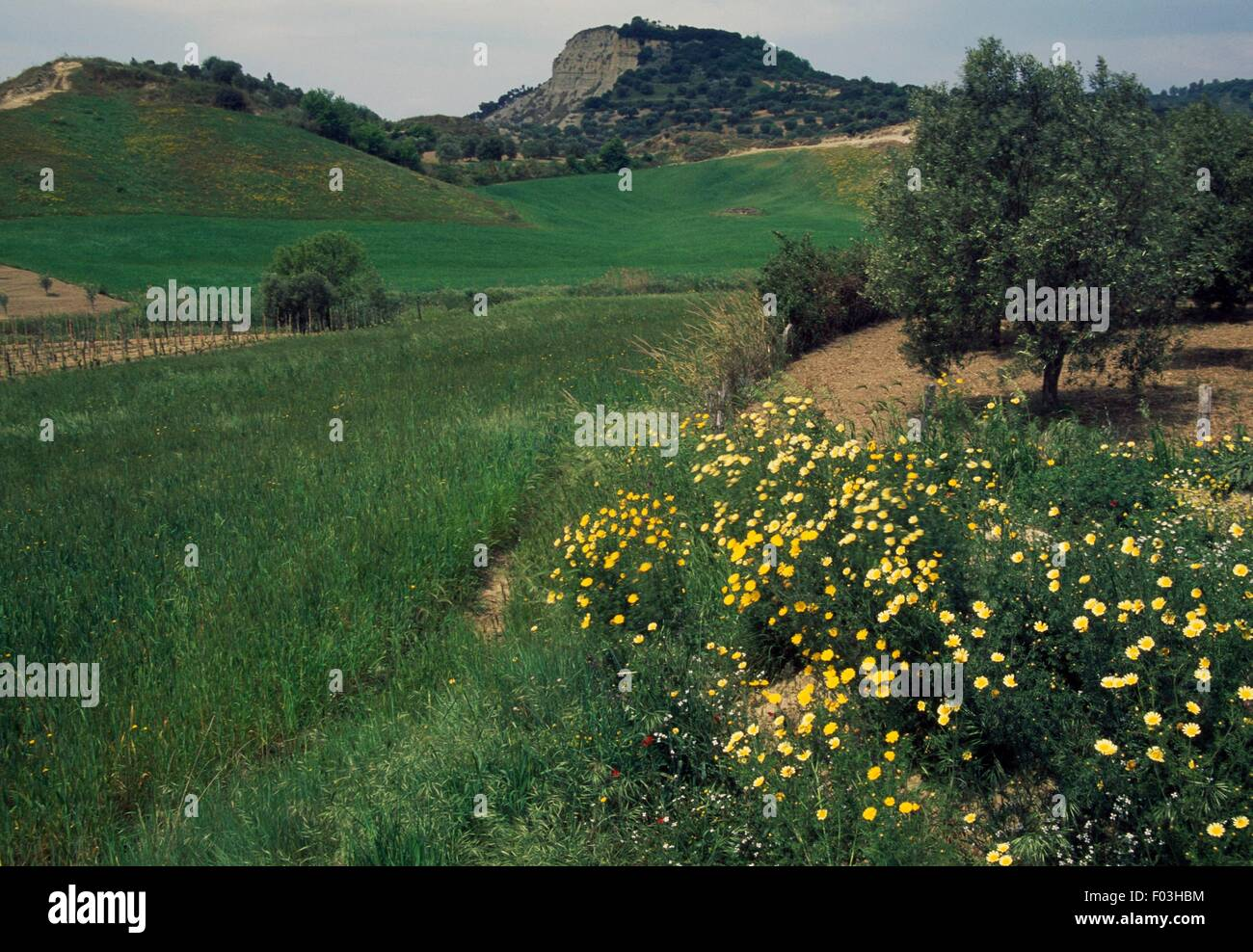 Agricultural landscape in the hinterland of Crotone, Calabria, Italy. - Stock Image