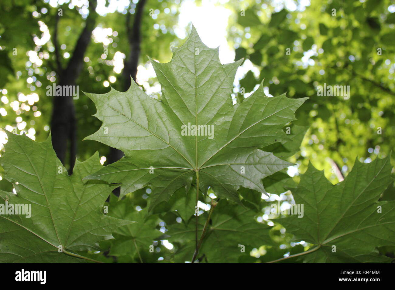 Focused leaves - Stock Image
