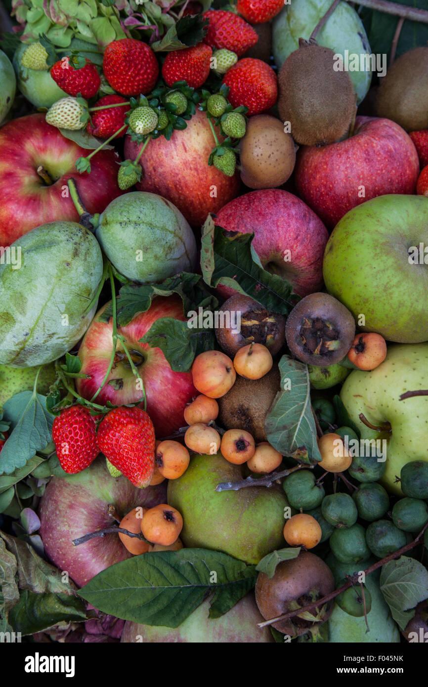 seasonal mixed fruit - Stock Image