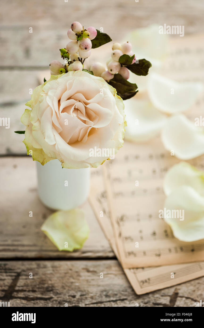 single ivory rose with snowberries and music paper in the background - Stock Image