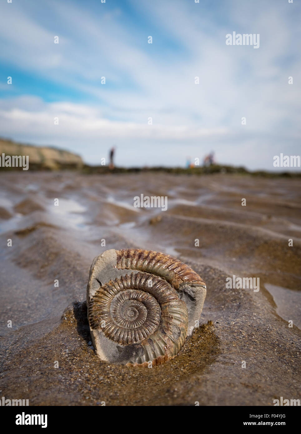 An ammonite fossil on the beach at Robin Hood's Bay, part of the Yorkshire Jurassic Coast, UK - Stock Image