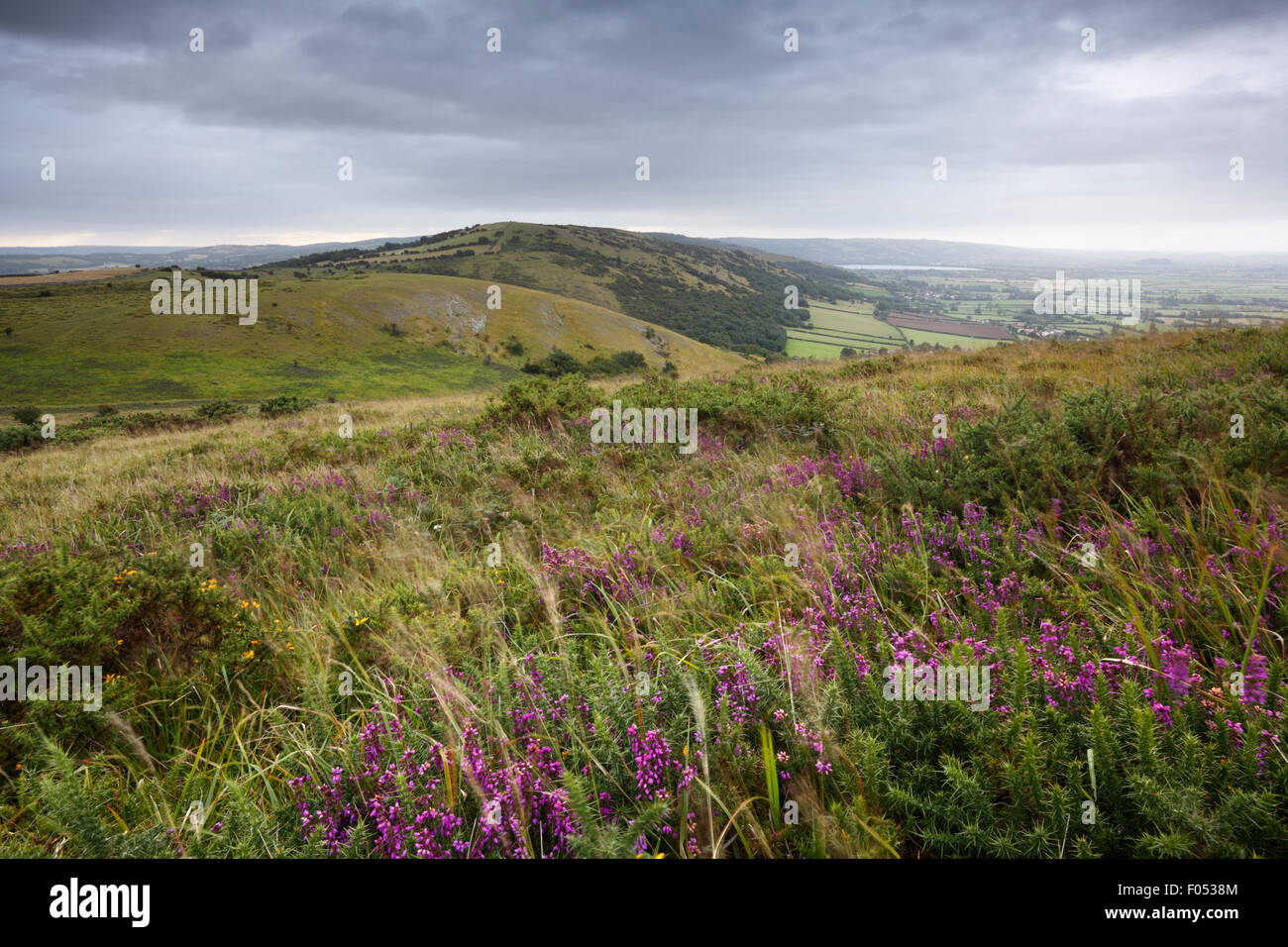 View from Crook Peak. The Mendip Hills. Somerset. UK. - Stock Image