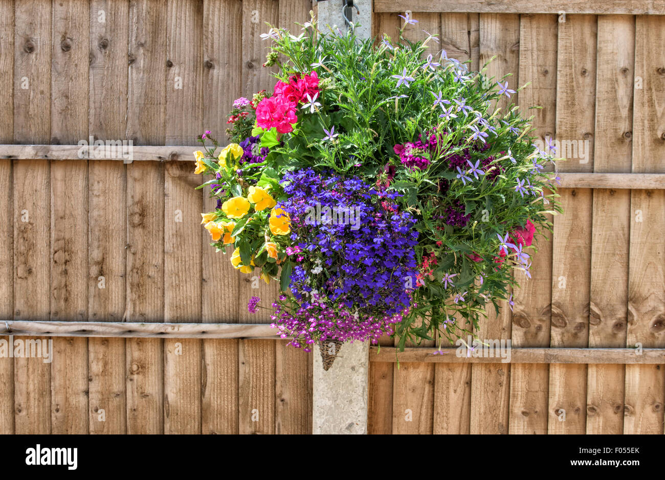 Pretty hanging basket of flowering plants near a wooden fence - Stock Image