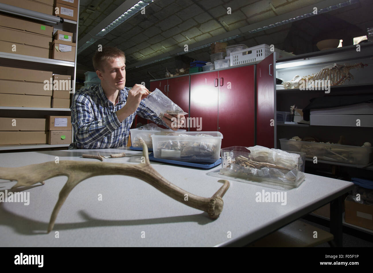 archaeology student working with artefacts - Stock Image