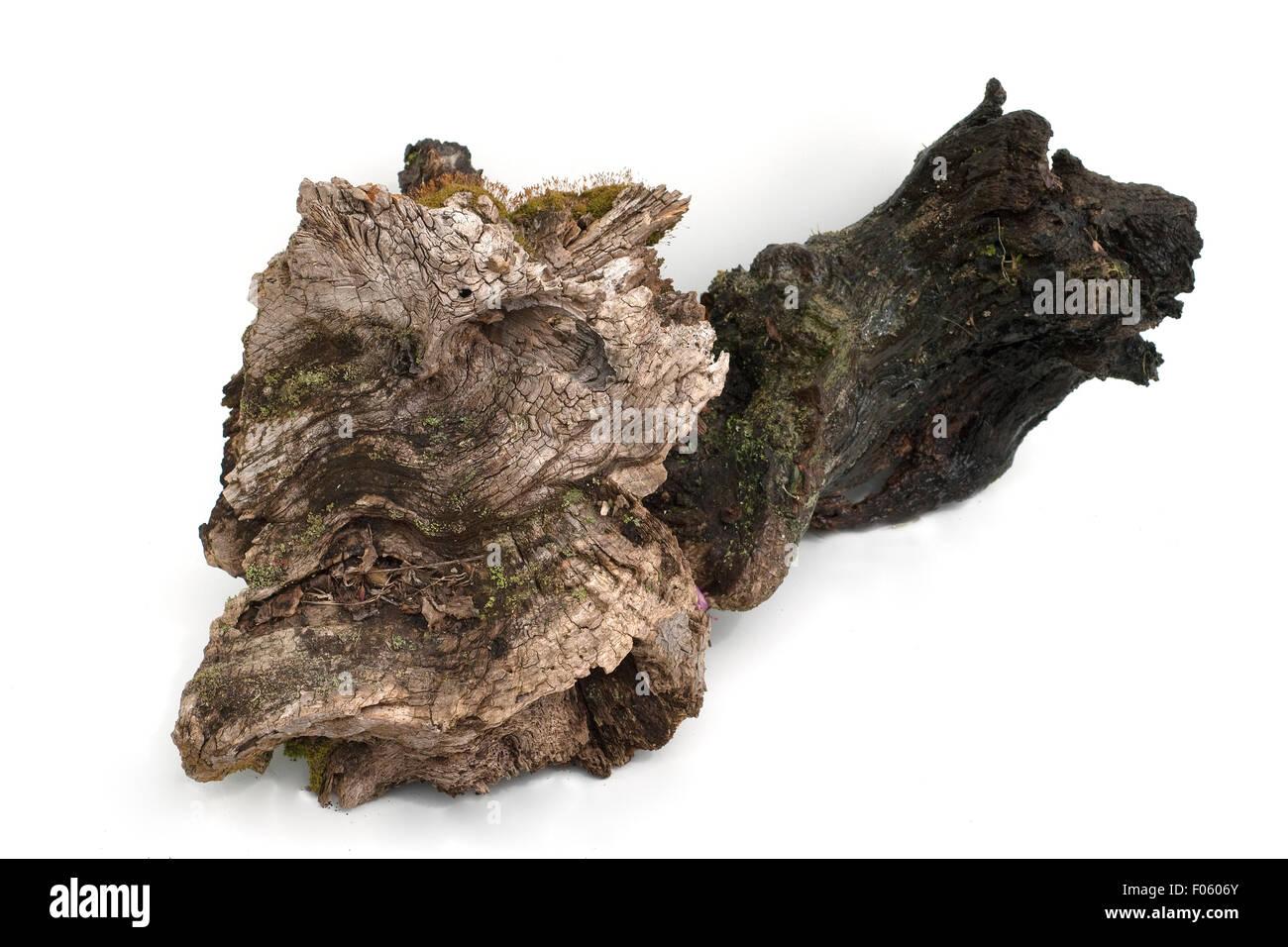 Wurzel - Stock Image