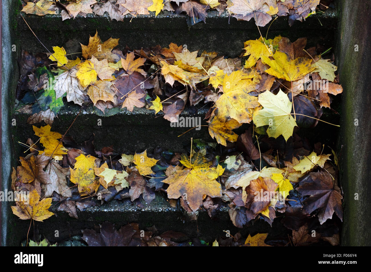 Italy, Lombardy, Autumn Leaves on Steps - Stock Image