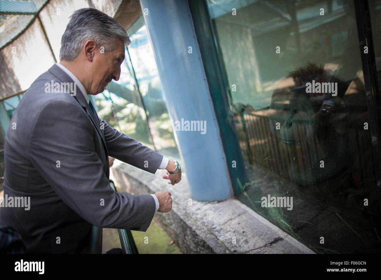 (150808) -- MEXICO CITY, Aug. 8, 2015 (Xinhua) -- Image taken on Aug. 3, 2015 shows the Veterinarian, Arturo Rivera - Stock Image