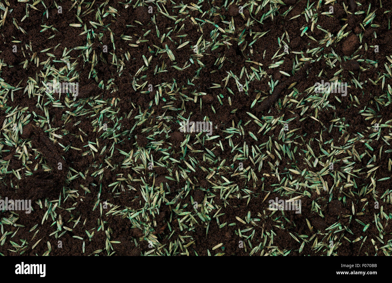 Grass Seed in top soil - Stock Image