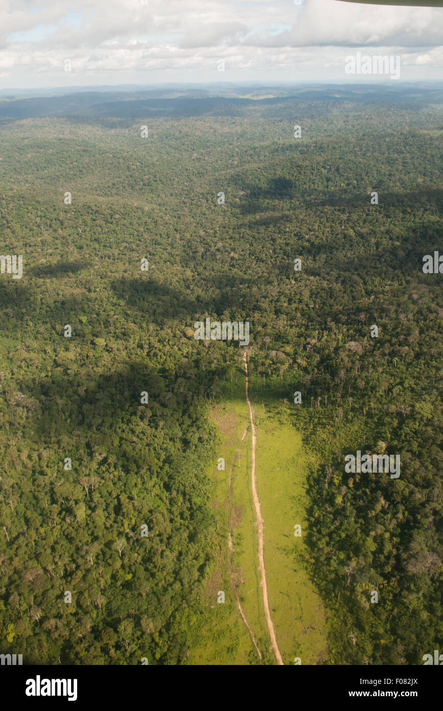 Novo Progresso, Para State, Amazon, Brazil. Aerial view of deep, thick forest with a track, deforested on both sides. - Stock Image