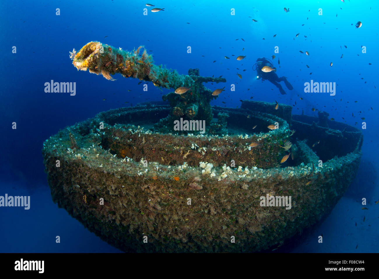 Gun on Bow of LST 349 Wreck, Ponza, Italy - Stock Image