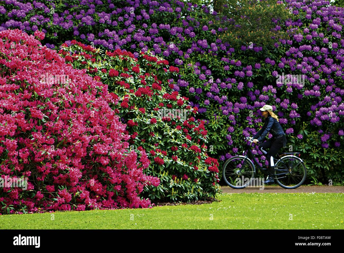 girl cycling in rhododendron park bremen germany stock photo 86246577 alamy. Black Bedroom Furniture Sets. Home Design Ideas