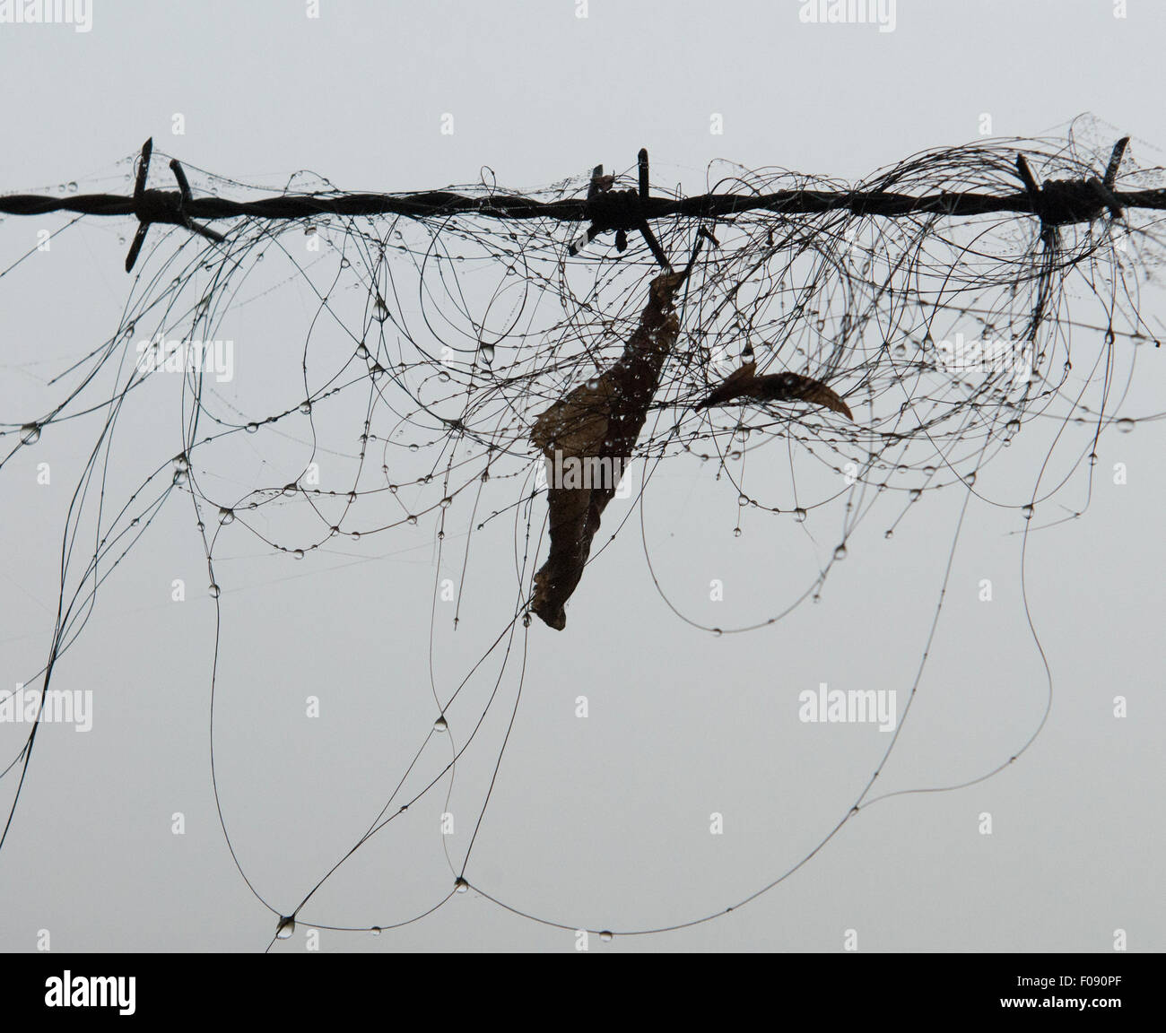 Horse hair caught on barbed wire Stock Photo: 86250039 - Alamy