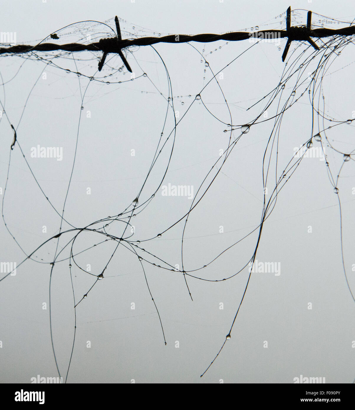 Barbed Wire Hair Stock Photos & Barbed Wire Hair Stock Images - Alamy