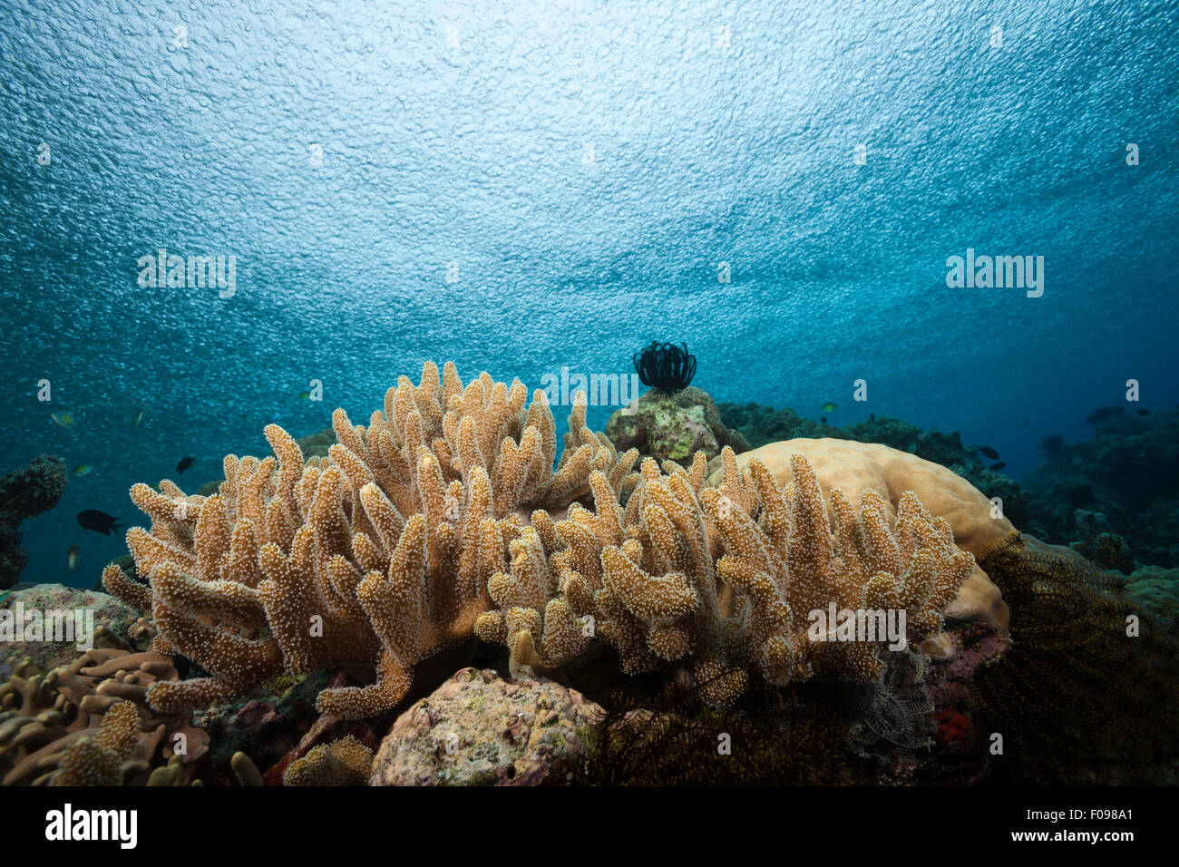 Rain over Coral Reef, Russell Islands, Solomon Islands - Stock Image