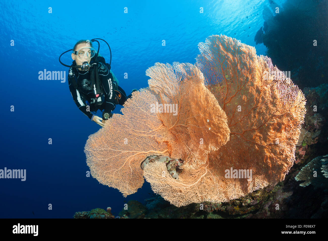 Scuba Diver over Coral Reef, Russell Islands, Solomon Islands - Stock Image