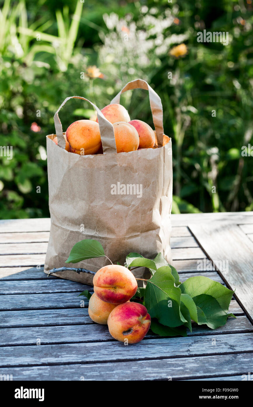 Hand-picked apricots in paper bag on wooden garden table in sunlight - Stock Image
